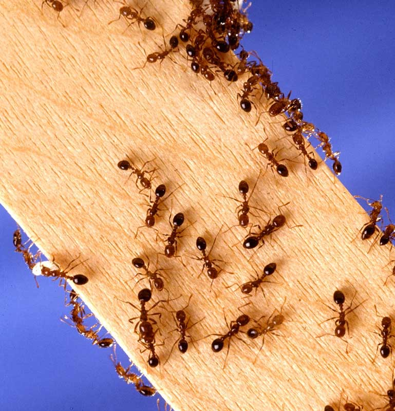 Eliminate Pests From Your Home