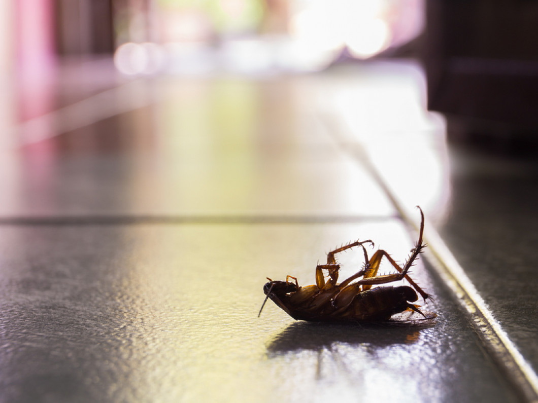 Are Roaches Taking Over Your Property