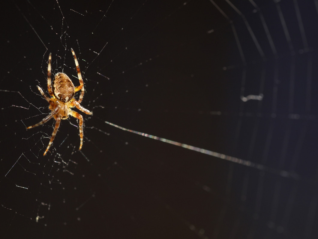 Kick Spiders Out of Your Home or Office